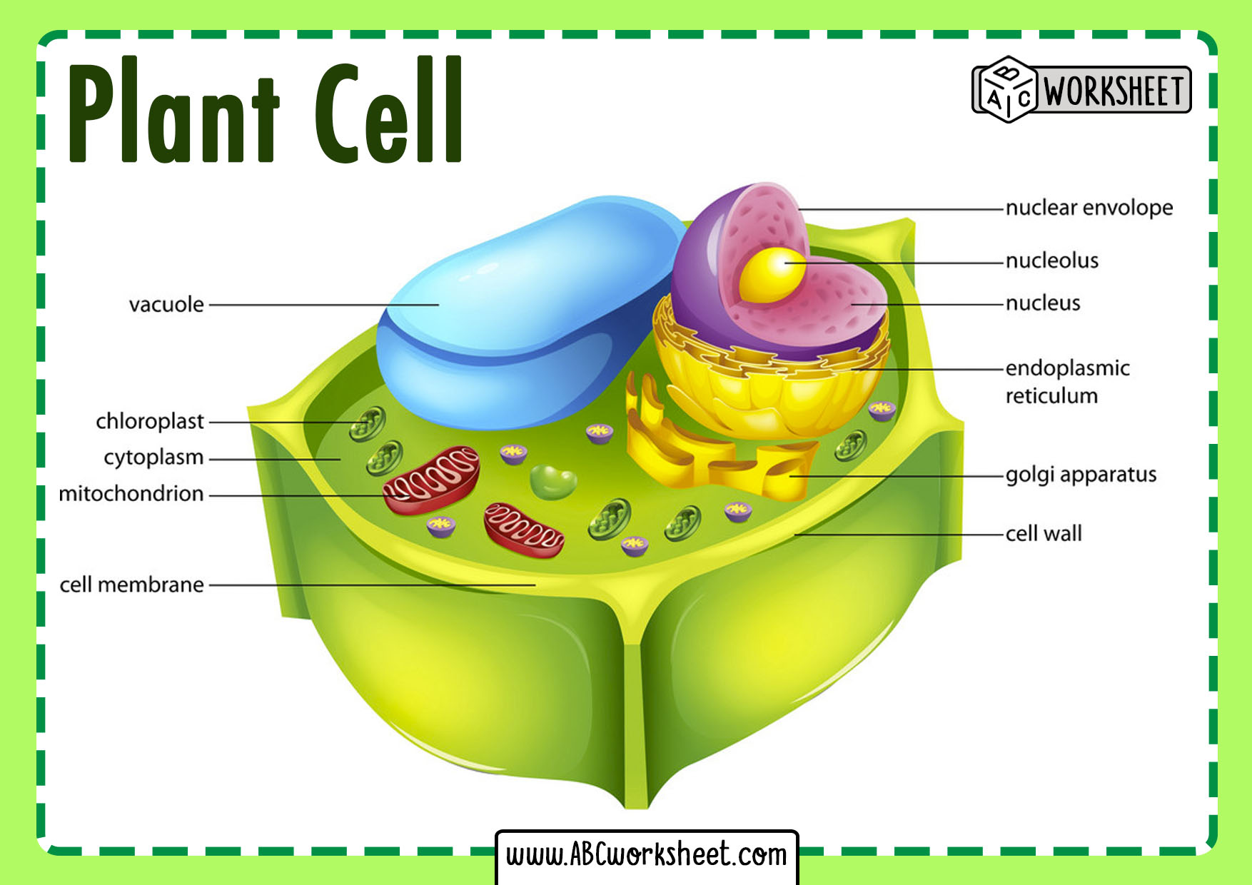 Plant Cell Parts - ABC Worksheet